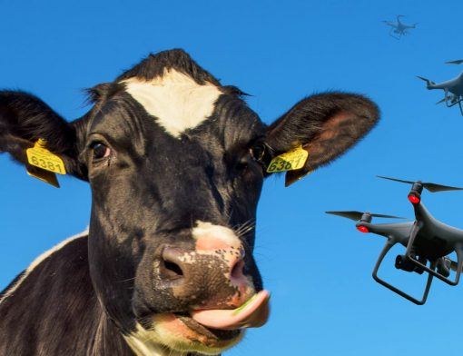 Drones e gado